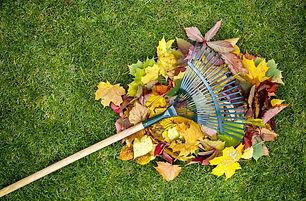 raking-up-leaves-backyard-hs.jpg