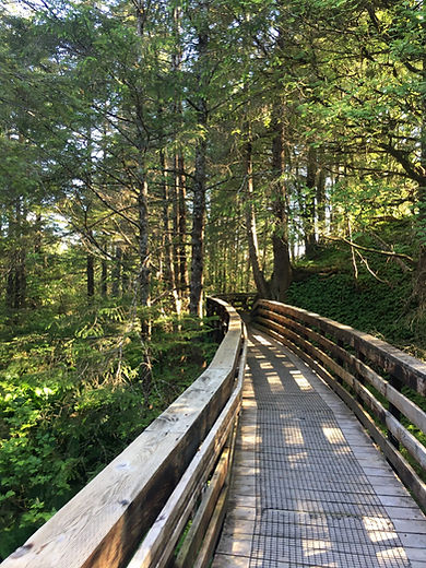 Cross Trail-Gavin Hill Trail.jpg