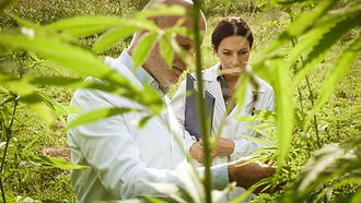 researchers-checking-hemp-plants-in-the-