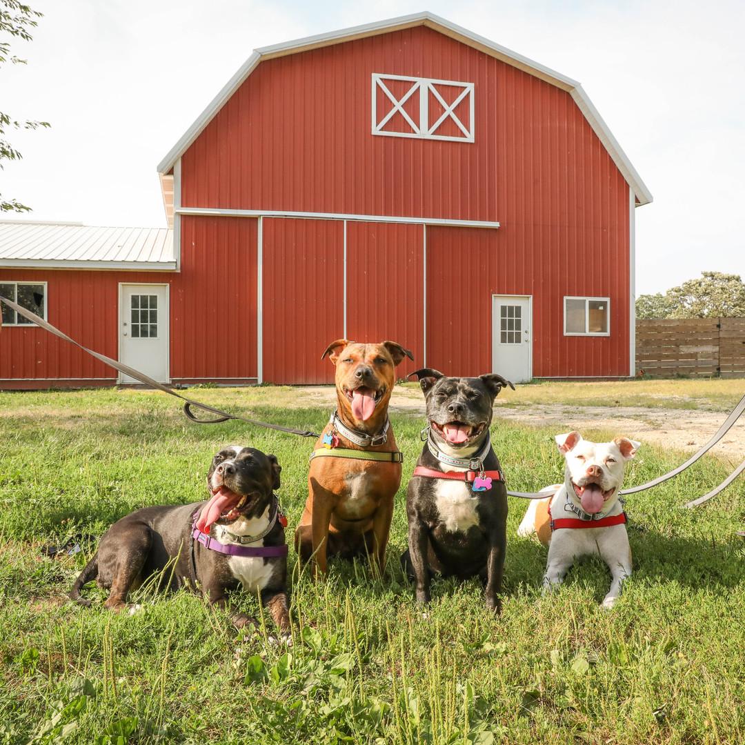 Pups visitng the Big Barn