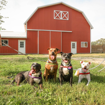 Pups visitng the Big Barn