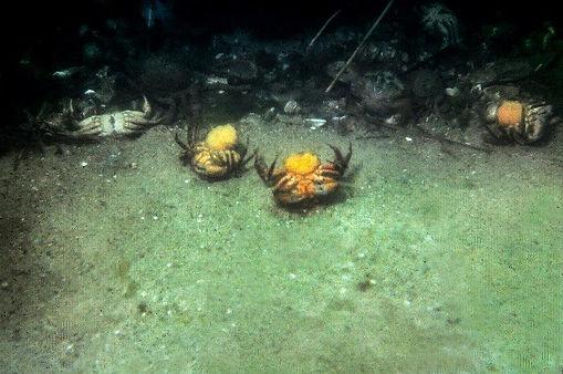 Dredge Crabs.jpg