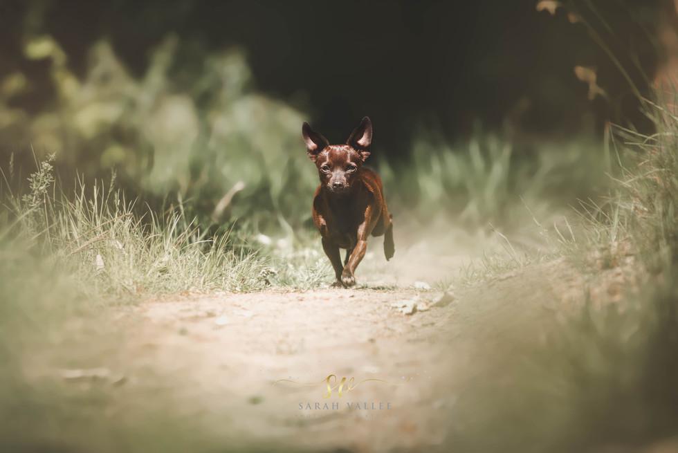 Dog photographer Belgium