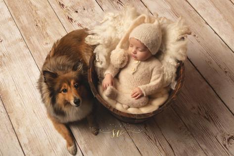 Nouveau né et chien séance photos