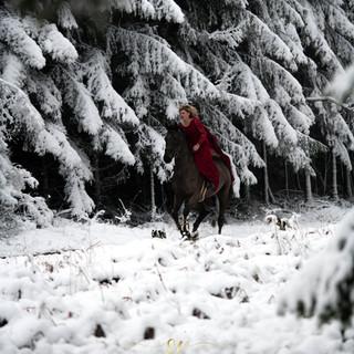 photos de chevaux en belgique
