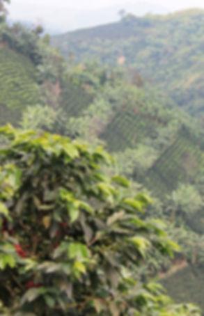 Montañas de Fincafé