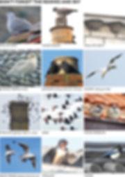 ROOVES & SKY.jpg