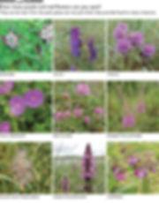 FLOWERS purp red 1.jpg