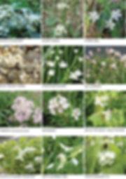 FLOWERS white 2.jpg