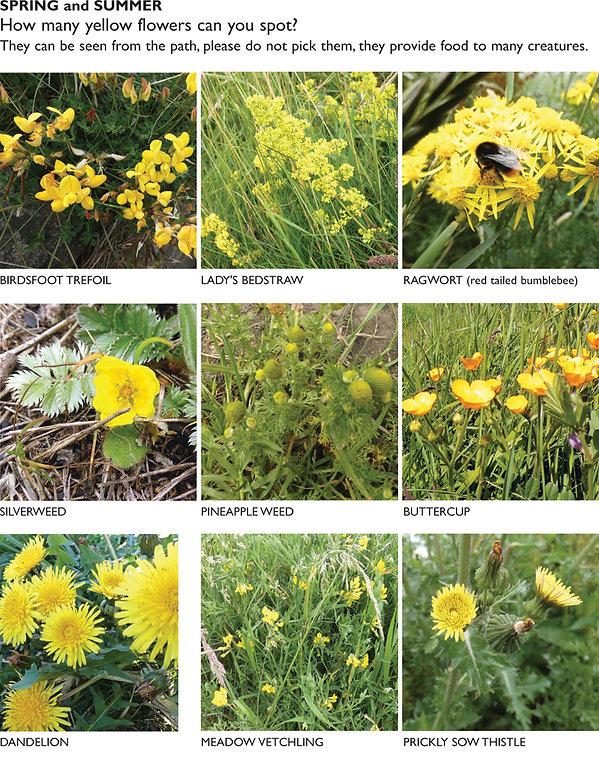 FLOWERS yellow 1.jpg