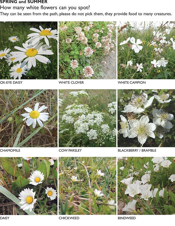 FLOWERS white 1.jpg
