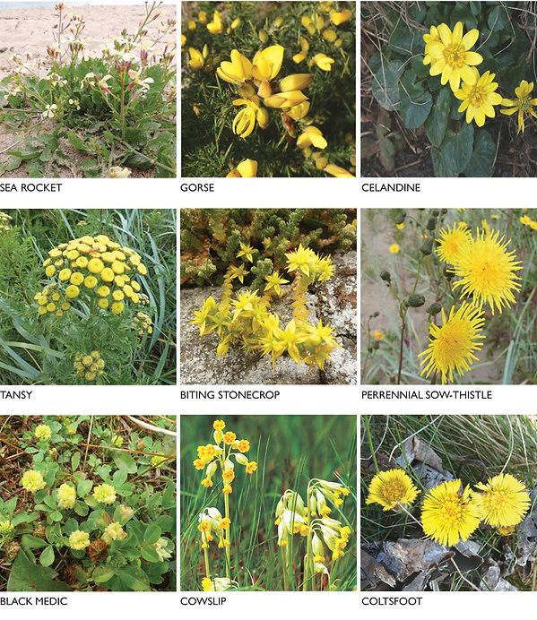 FLOWERS yellow 2.jpg