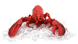 4052842-161633-lobster-on-ice-isolated-on-a-white-background.jpg