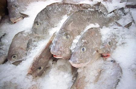 frozen-fish.jpg