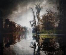 Maurepas Swamp IV