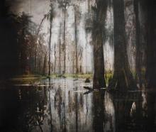 Maurepas Swamp III
