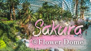 #07 Sakura @ Flower Dome