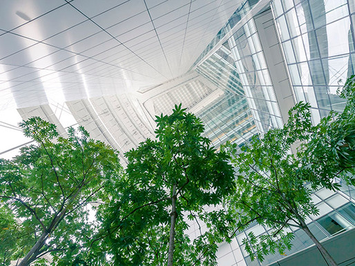 Second Place (Greening the City), International Garden Photographer of the Year 2016