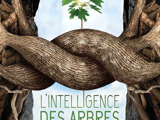 Soirée cinéma avec « L'intelligence des arbres »