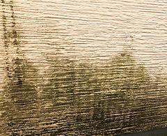 壁のカビ・苔