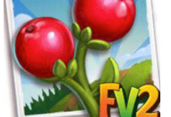 New Crop  Christmas Berry             (Coming Soon)