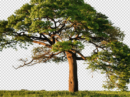How to Remove Background from Trees in Photoshop | Photoshop Tutorial