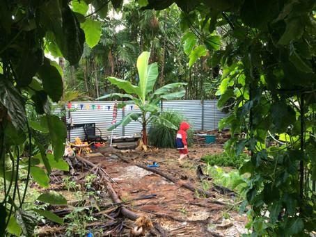 Garden update: Wet season planting