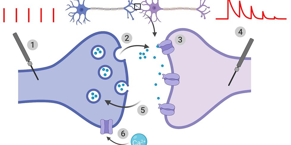 Model-based methods in Neuroscience