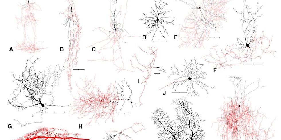 NeuroMeetup May: Diversity in Neuroscience