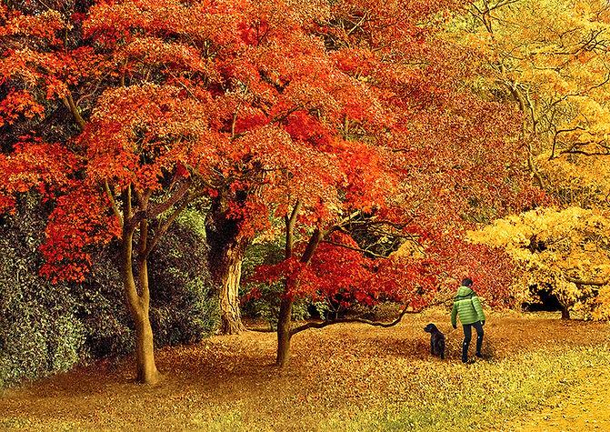 Autumn Glories