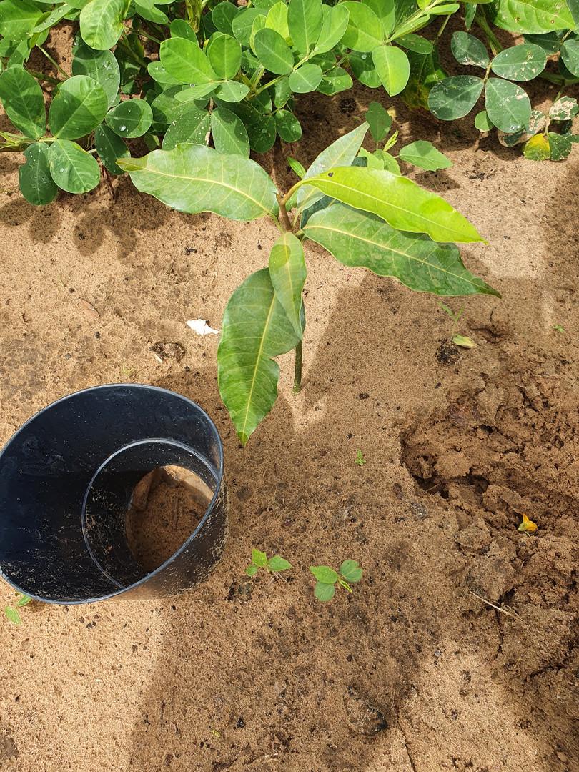 Manguiers Coly Basse 4.jpg