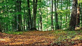 Samen in het bos