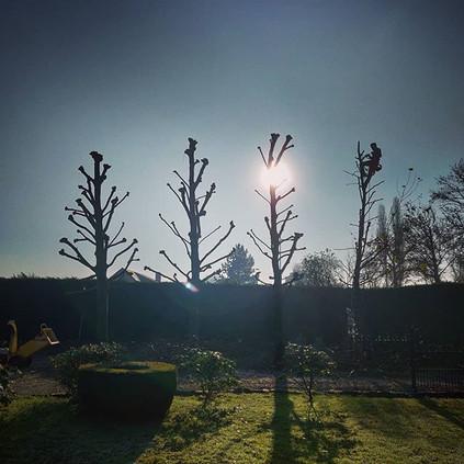 Bomen knotten. 🌳🌳🌳🌳📸.jpg