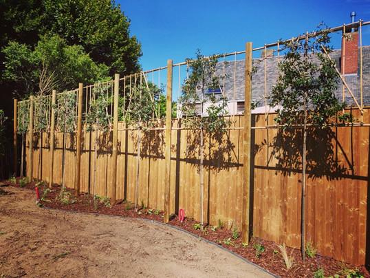Plantvakken afgeboord met ecolat, afgewerkt met vast beplanting en schors.