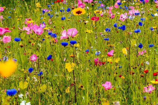 Bloemenweide.jpg