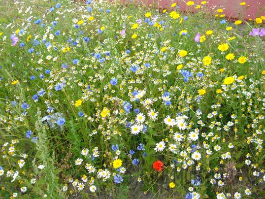 Bloemenweide4.jpg