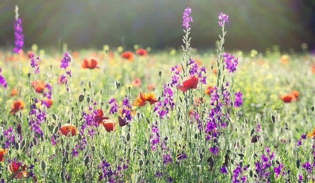 Bloemenweide2.jpg