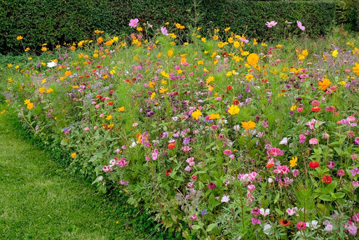 Bloemenweide5.jpg