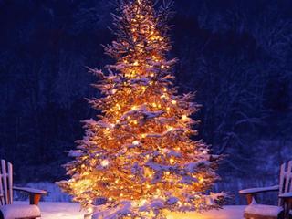 Je kerstboom bewaren voor volgend jaar
