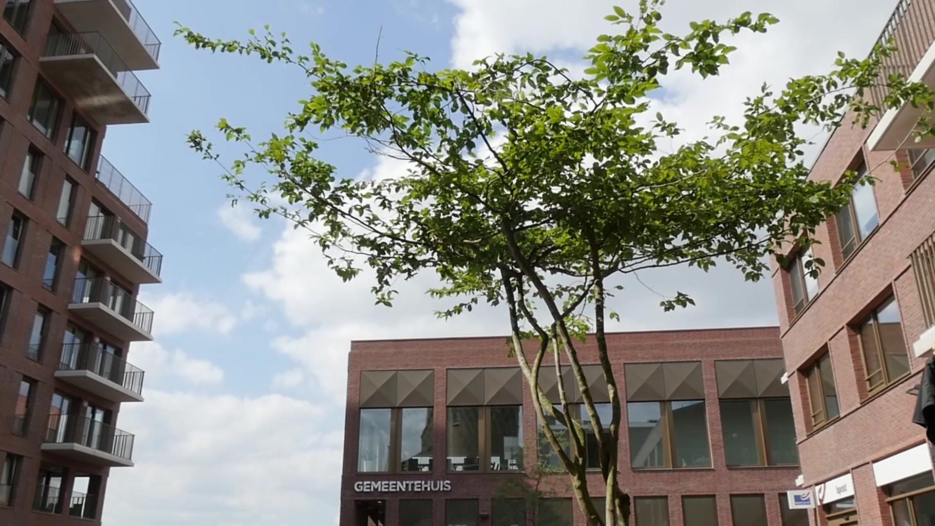 Prachtige bomen in mooie boombakken