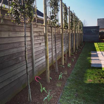 Schors onder leibomen in combinatie met winterharde beplanting