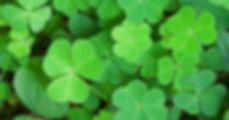 shamrock-plant_facebook.jpg