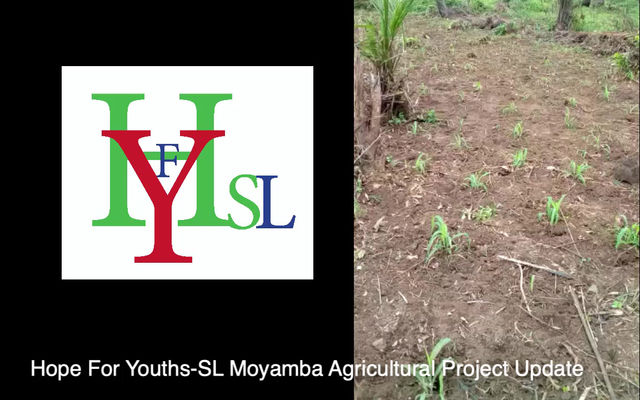 Moyamba District Youths Empower Youths through Agriculture