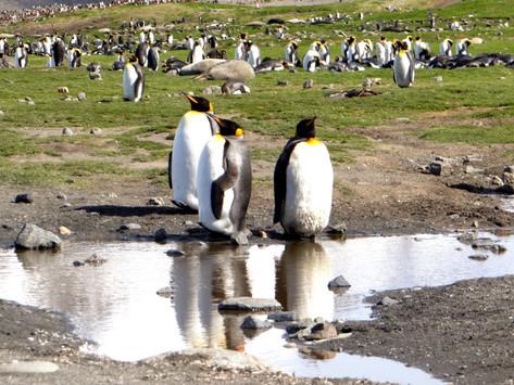 היבשת השביעית- אנטארקטיקה