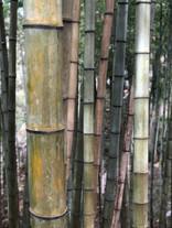 יער במבוק עמק קיסו