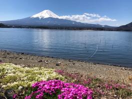תצפית על הר פוג'י מאגם קאוואגוצ'יקו