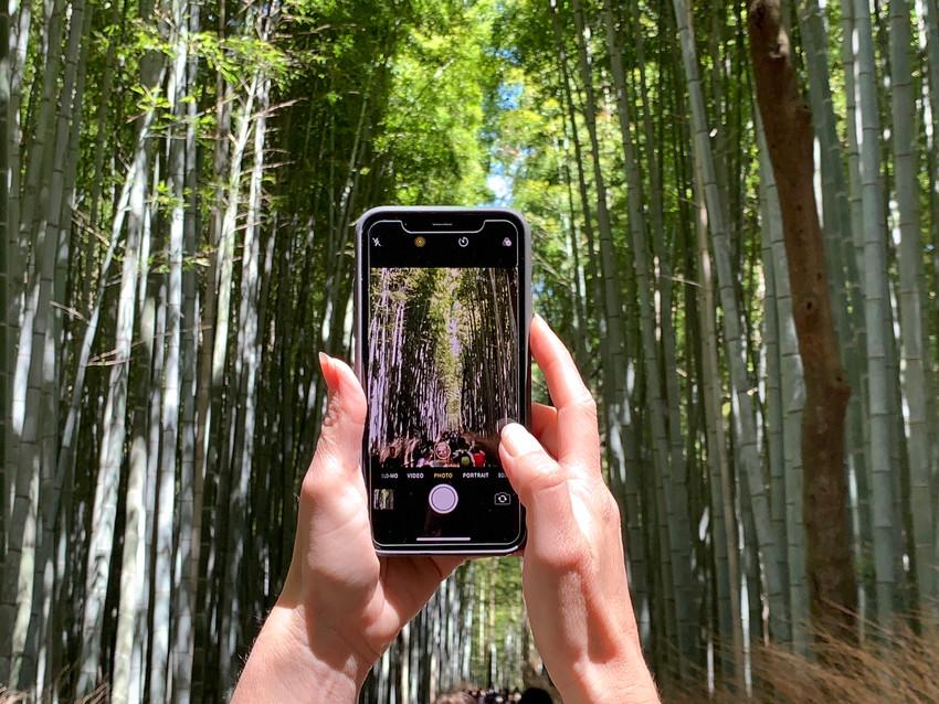 יער הבמבוקים קיוטו אראשיאמה