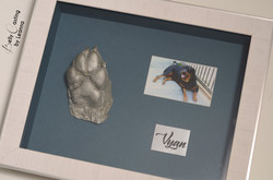 Vyan's paw casting