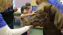Hospitals look to horses to help with the healing process