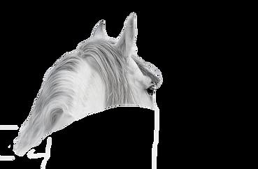 white_horseremoveback.png
